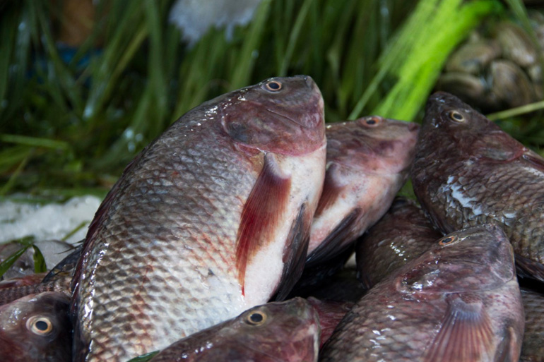 Cleaned Tilapia 3 pcs